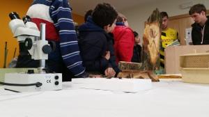 efa fonteboa juegos tradicionales 2